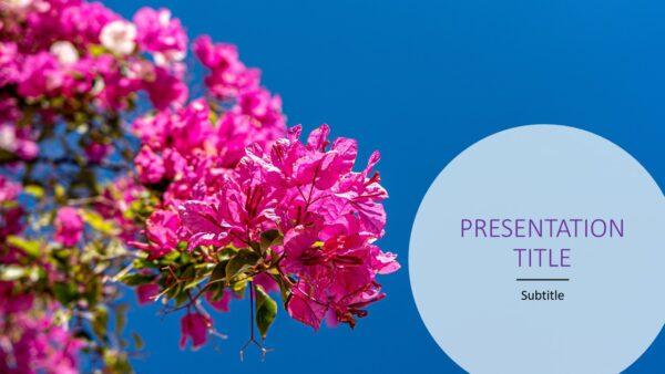 Flower-pink flower-nature-blue sky